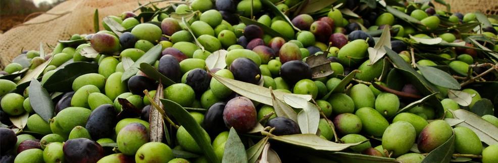 Dicembre: un mese ricco di attività per sperimentare la Puglia