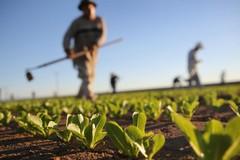 Legalità e trasparenza nel settore agricolo e ortofrutticolo