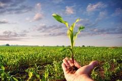 Acque reflue per l'agricoltura, il Comune lancia un avviso pubblico