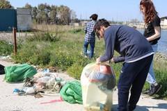 Gruppo di amici pulisce un'area del porto dai rifiuti