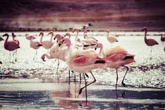 Nove giornalisti e blogger a Margherita di Savoia sulle orme del fenicottero rosa