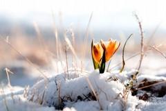 Danni all'agricoltura per il gelo, il Ministero stanzia fondi per 92 comuni. C'è anche Margherita