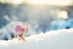 Gelo su tutta la Puglia, la neve danneggia le colture