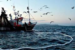 Niente pesca nell'Adriatico, fino a settembre c'è il fermo biologico