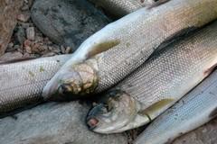 Fermo pesca, Gatta presenta mozione per erogazione delle liquidazioni pregresse