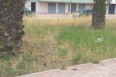 Gestione verde pubblico caos a Margherita di Savoia