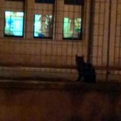 Gatti morti in città, il sindaco vuole vederci chiaro