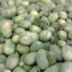 Successo per la sagra della «patata salinara»