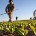 Aumenta l'occupazione in agricoltura, Coldiretti esulta