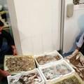 La Guardia Costiera passa al setaccio ristoranti e pescherie della BAT
