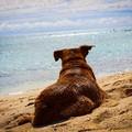 Animali da compagnia sulle spiagge, una proposta di legge regionale