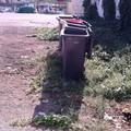 Bonificata dai rifiuti abbandonati l'area di Porto Canale