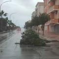Allerta meteo sul territorio ofantino