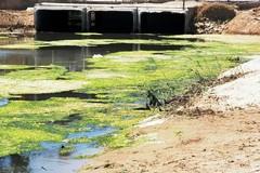 Canale H e collettore D, una call per la riqualificazione costiera