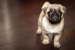 Animali domestici curati con farmaci umani, l'ordinanza del Ministro Speranza