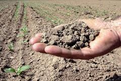 Temperature in aumento, Coldiretti: «Rischio desertificazione in Puglia»
