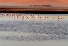 Zona umida delle saline: un serbatoio di biodiversità