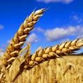 La regione Puglia stanzia 20 milioni di euro per attività extra-agricole