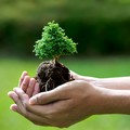 Festa dell'Albero, educatore al rispetto dell'ambiente