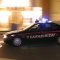 Sequestrata vasta piantagione di marijuana dai Carabinieri