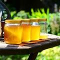 Alimentazione di soccorso per le api in Puglia. Coldiretti lancia l'adozione a distanza di arnie