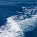 """Progetto  """"Appesca """", anche a Margherita fondali marini ai raggi X"""