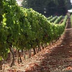 """Coldiretti: """"Taglio dell'Iva su beni alimentari essenziali ha un effetto valanga sul carrello degli italiani"""""""